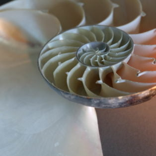 shell-with-light