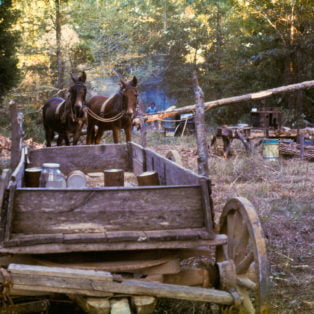 Frank and Jake, Chulahoma, Miss, October 1972. Making Doc James' molasses crop.1972 Photography13 X19$275 – Michael Ford