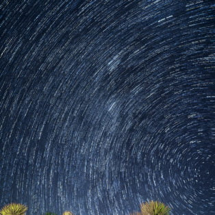 Honorable Mention: Star Trails Over Joshua Tree by Carol Ward