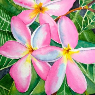 _Frangipani Tara Hamilton Watercolor 8_x10_ $300 - Tara Hamilton